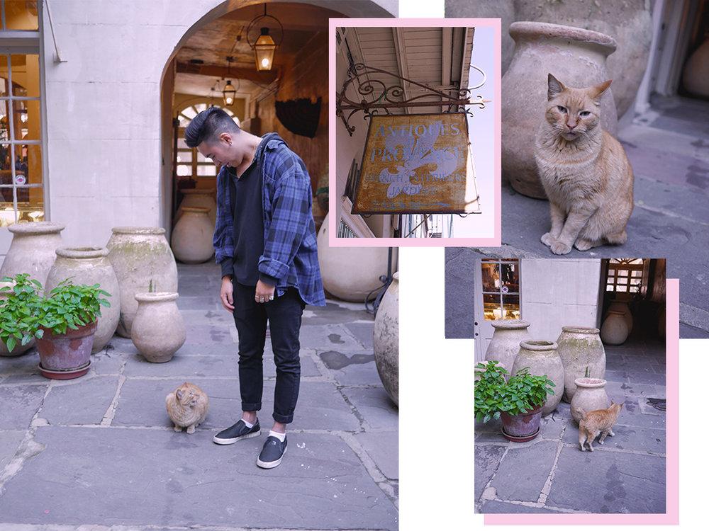 kittycatArtboard 3.jpg