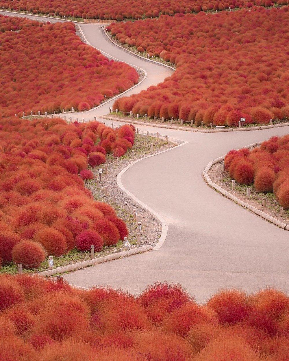 Ibaraki, Japan - taken by Takumi @tkm82_