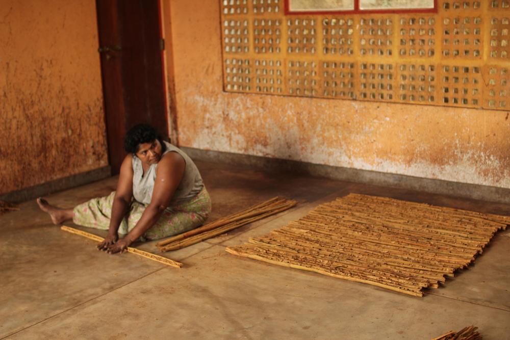 Rolling cinnamon, Sri Lanka