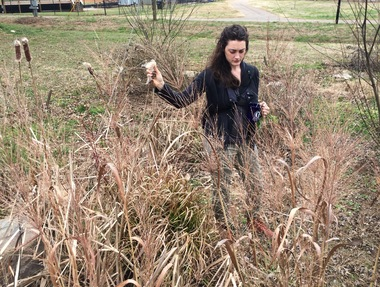 Cameron holding a Cattail seed pod on an herb walk with her volunteers.