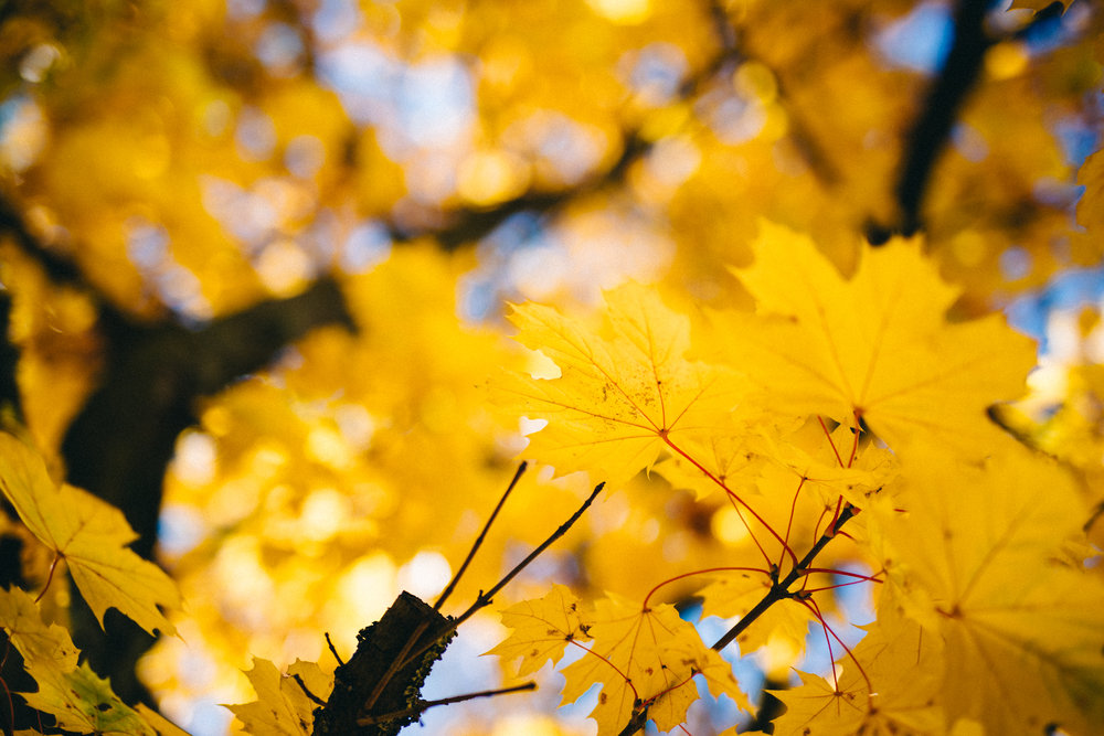 WasDrew_Autumn_Vibes_002.jpg
