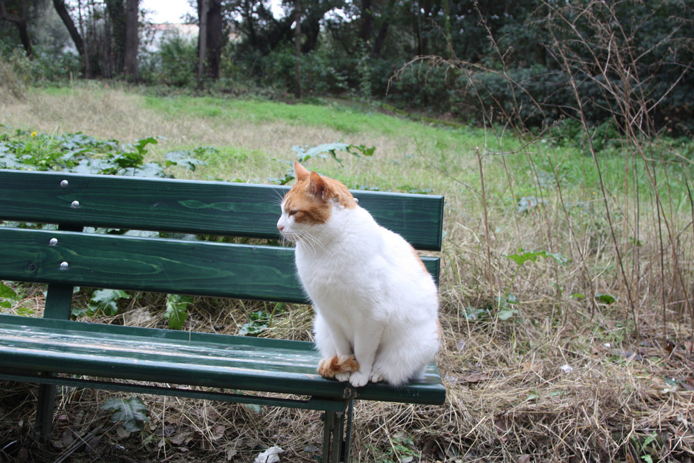 Cat Parc.jpg