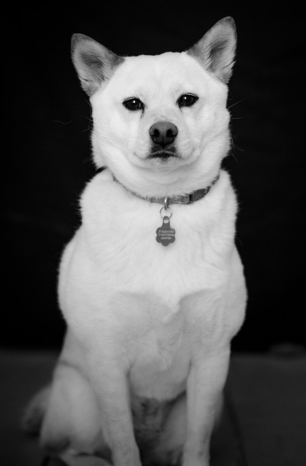 Luna - I am named after the moon. I am also the perfect dog model for any photoshoot. I am also guaranteed to break your heart.