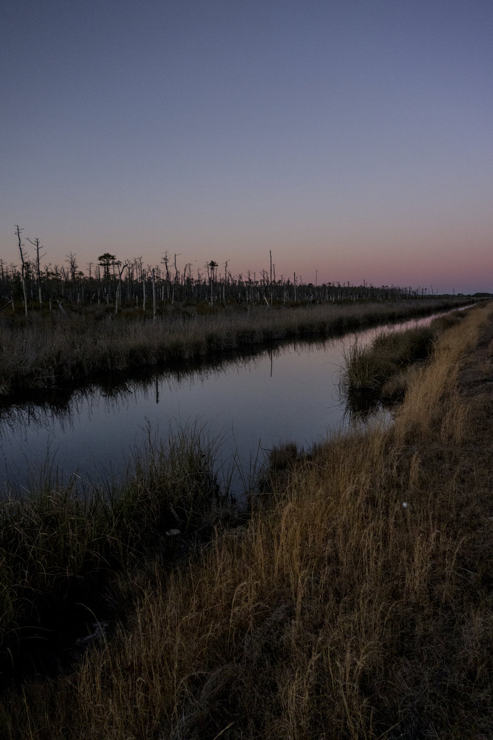 Alligator River Refuge
