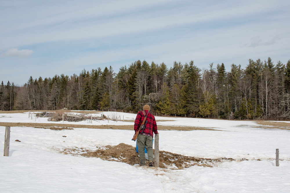"""Tom Galinat, 35, walks the farm's fence line checking for signs of damage and coyotes on Friday, April 7, 2018 after a heavy wind storm in Peacham, V.T. Galinat moved to the town in 2013 to farm with his family on their land. A father of two as well as the town's clerk, Galinat says he is a gun owner who is in favor of what he calls common sense gun control. """"We need gun safety measures passed because we're abusing that,"""" he said. """"It's not the gun, it's the features of the gun. Like higher capacity magazines."""" For Galinat and his family, their livelihood relies on owning a firearm, hunting for food as well as its use on their farm in rural Vermont. He explained a gun is no different of a tool to him than a hammer or saw and he grew up with his grandfather using a gun to hunt. Galinat inherited his grandfather's Savage Fox Model D side-by-side two-trigger shotgun which was once used for bird hunting and is now brought out each year for opening day of turkey hunting. There is a sentimental attachment, he said, describing a worn out area on the stock where his grandfather's hand would grip. """"I don't want to give up my guns,"""" he said, following chores at his farm on Friday, April 7, 2018. """"I relate to both sides so well.""""John Tully for The New York Times"""