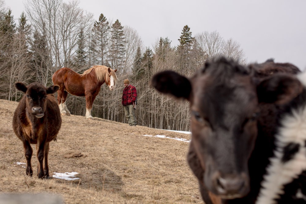 """Tom Galinat, 35, stops to visit with his horse, Pete, while tending to chores on a farm in Peacham, V.T. Galinat moved in 2013 to farm with his family on their land. A father of two as well as the town's clerk, Galinat says he is a gun owner who is in favor of what he calls common sense gun control. """"We need gun safety measures passed because we're abusing that,"""" he said. """"It's not the gun, it's the features of the gun. Like higher capacity magazines."""" For Galinat and his family, their livelihood relies on owning a firearm, hunting for food as well as its use on their farm in rural Vermont. He explained a gun is no different of a tool to him than a hammer or saw and he grew up with his grandfather using a gun to hunt. Galinat inherited his grandfather's Savage Fox Model D side-by-side two-trigger shotgun which was once used for bird hunting and is now brought out each year for opening day of turkey hunting. There is a sentimental attachment, he said, describing a worn out area on the stock where his grandfather's hand would grip. """"I don't want to give up my guns,"""" he said, following chores at his farm on Friday, April 7, 2018. """"I relate to both sides so well.""""John Tully for The New York Times"""