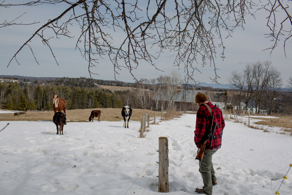 """Tom Galinat, 35, takes care of a few chores, which includes walking the fence-line checking for predators or damage, on a farm in Peacham, V.T. Galinat moved in 2013 to farm with his family on their land. A father of two as well as the town's clerk, Galinat says he is a gun owner who is in favor of what he calls common sense gun control. """"We need gun safety measures passed because we're abusing that,"""" he said. """"It's not the gun, it's the features of the gun. Like higher capacity magazines."""" For Galinat and his family, their livelihood relies on owning a firearm, hunting for food as well as its use on their farm in rural Vermont. He explained a gun is no different of a tool to him than a hammer or saw and he grew up with his grandfather using a gun to hunt. Galinat inherited his grandfather's Savage Fox Model D side-by-side two-trigger shotgun which was once used for bird hunting and is now brought out each year for opening day of turkey hunting. There is a sentimental attachment, he said, describing a worn out area on the stock where his grandfather's hand would grip. """"I don't want to give up my guns,"""" he said, following chores at his farm on Friday, April 7, 2018. """"I relate to both sides so well.""""John Tully for The New York Times"""