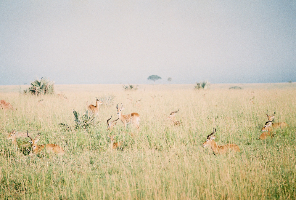 Safari_ (5 of 17).jpg
