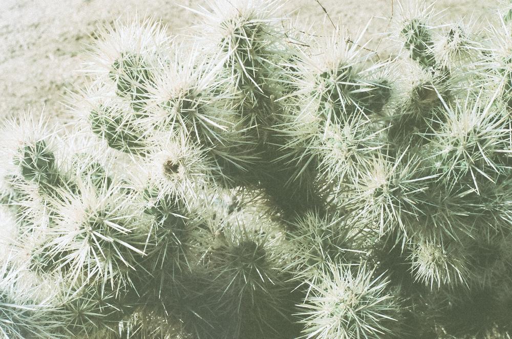 desertdreams1 (3 of 6).jpg