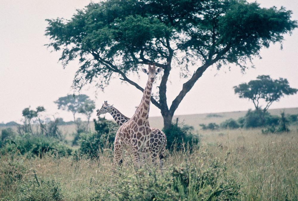 Safari_ (11 of 17).jpg