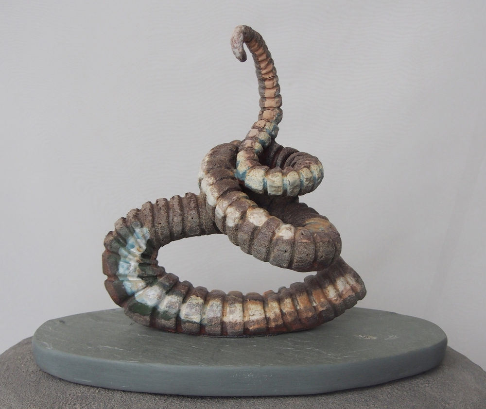 Corkscrew Ammonite