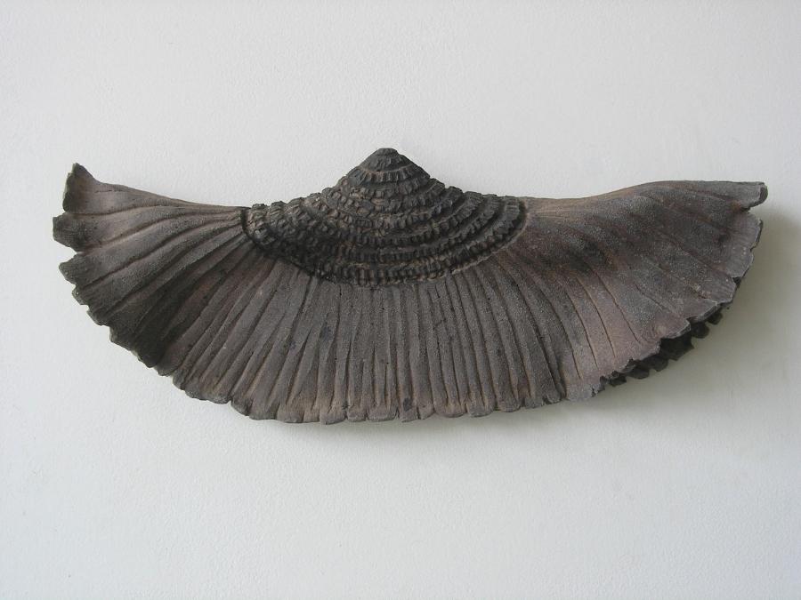 Skirt (mycological)