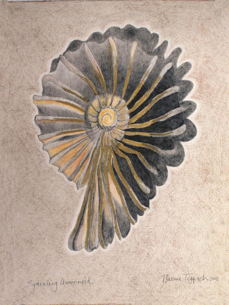 Spiraling Ammonoid