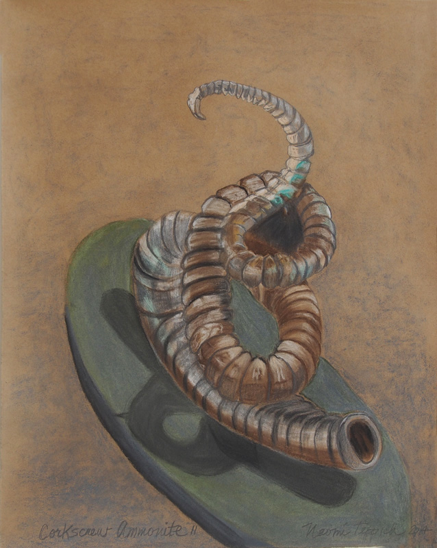 Corkscrew Ammonite II