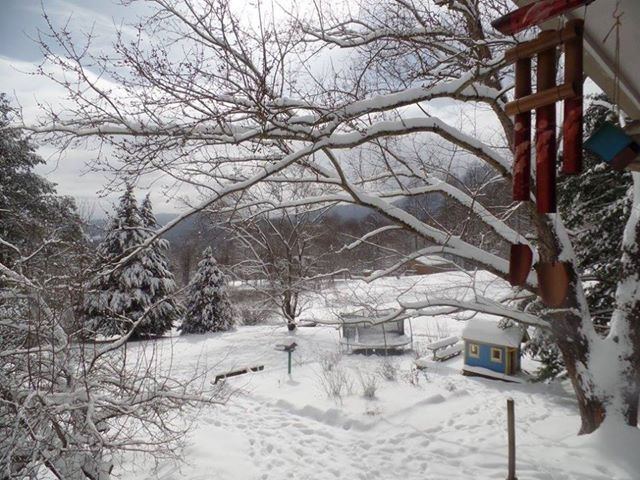 Snowfall From Denises Property In Johnathan Creek