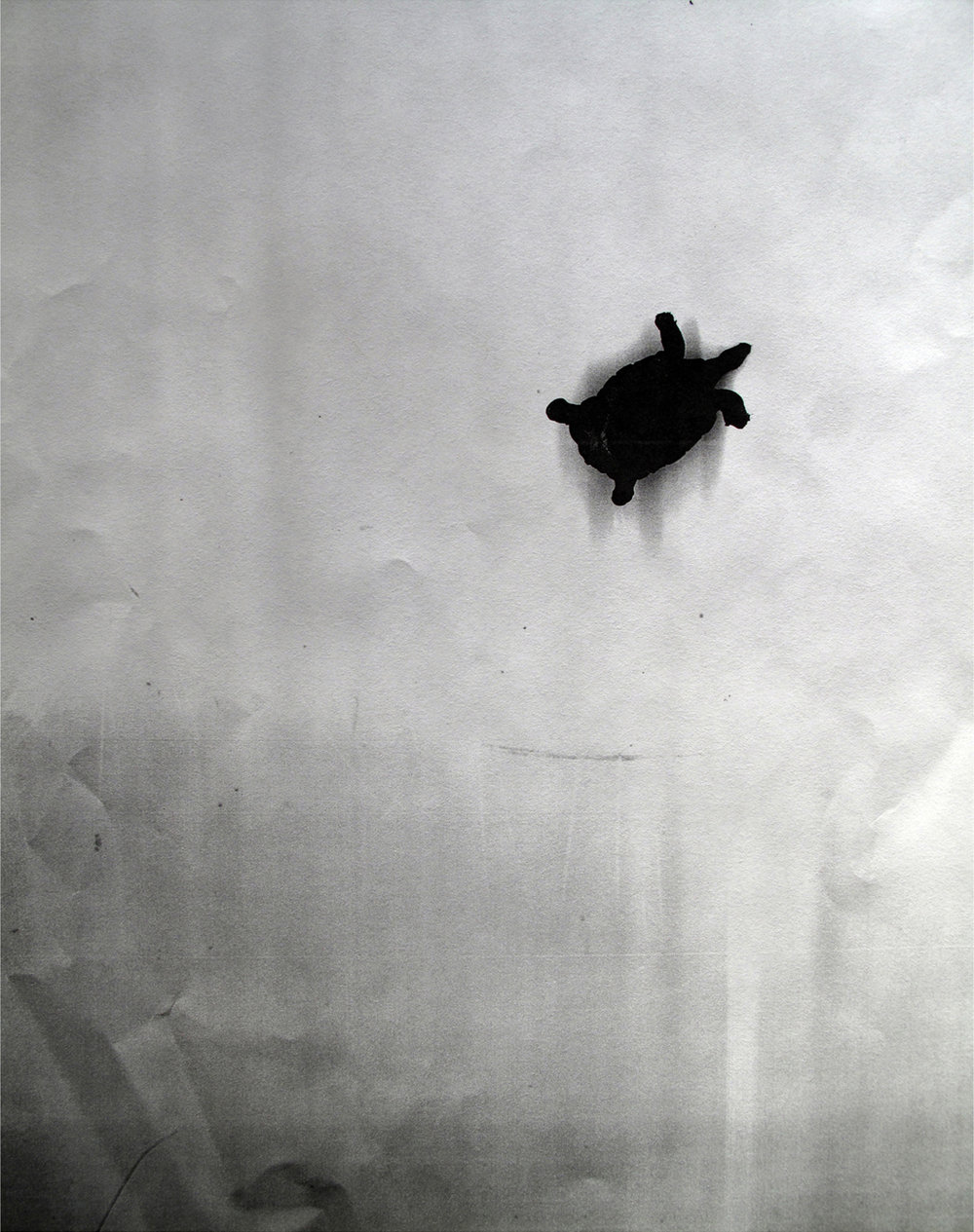 Xerox (Turtle) , 2015.  Digital print of a photocopy.  20 x 17 in.