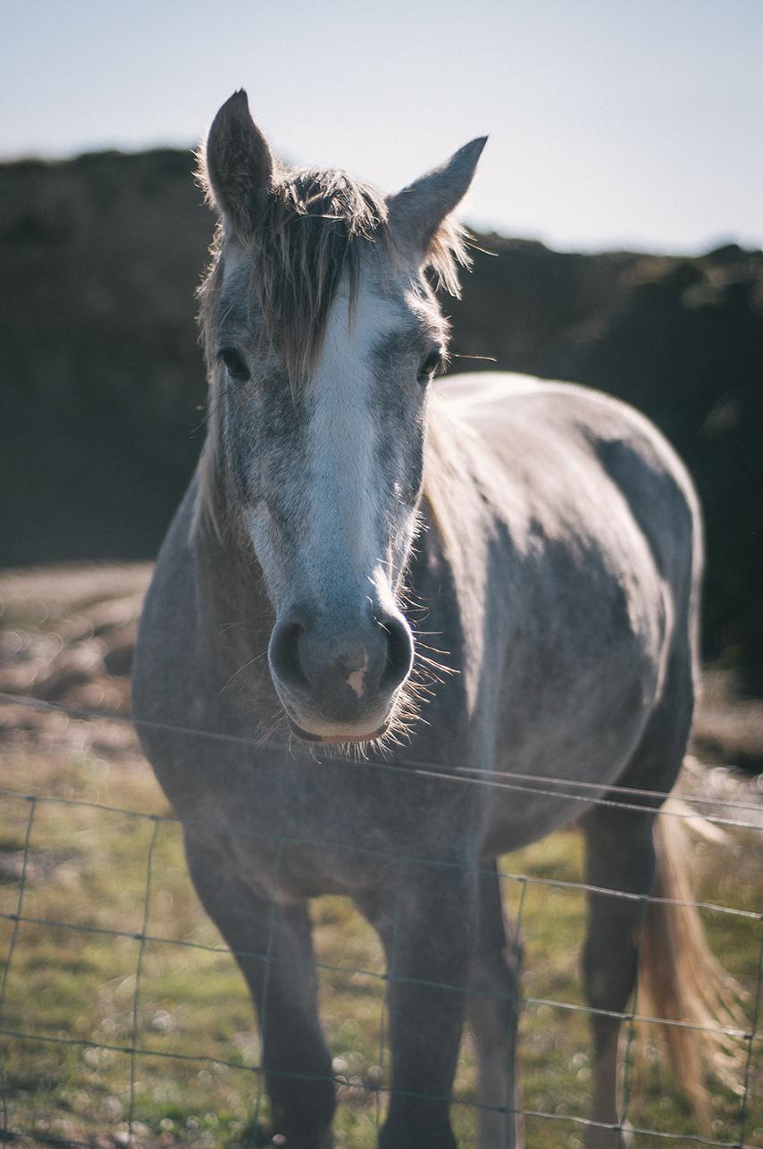 101114_HorsePortrait_AndrewFosterPhoto.jpg