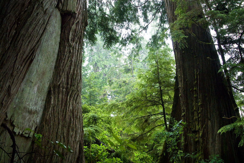 Great Bear National Rainforest, captured by Andrew S. Wrighton our trip through the forest.