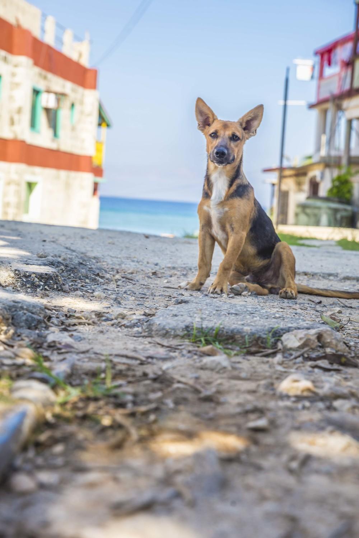 20151110_Cuba-8465.jpg