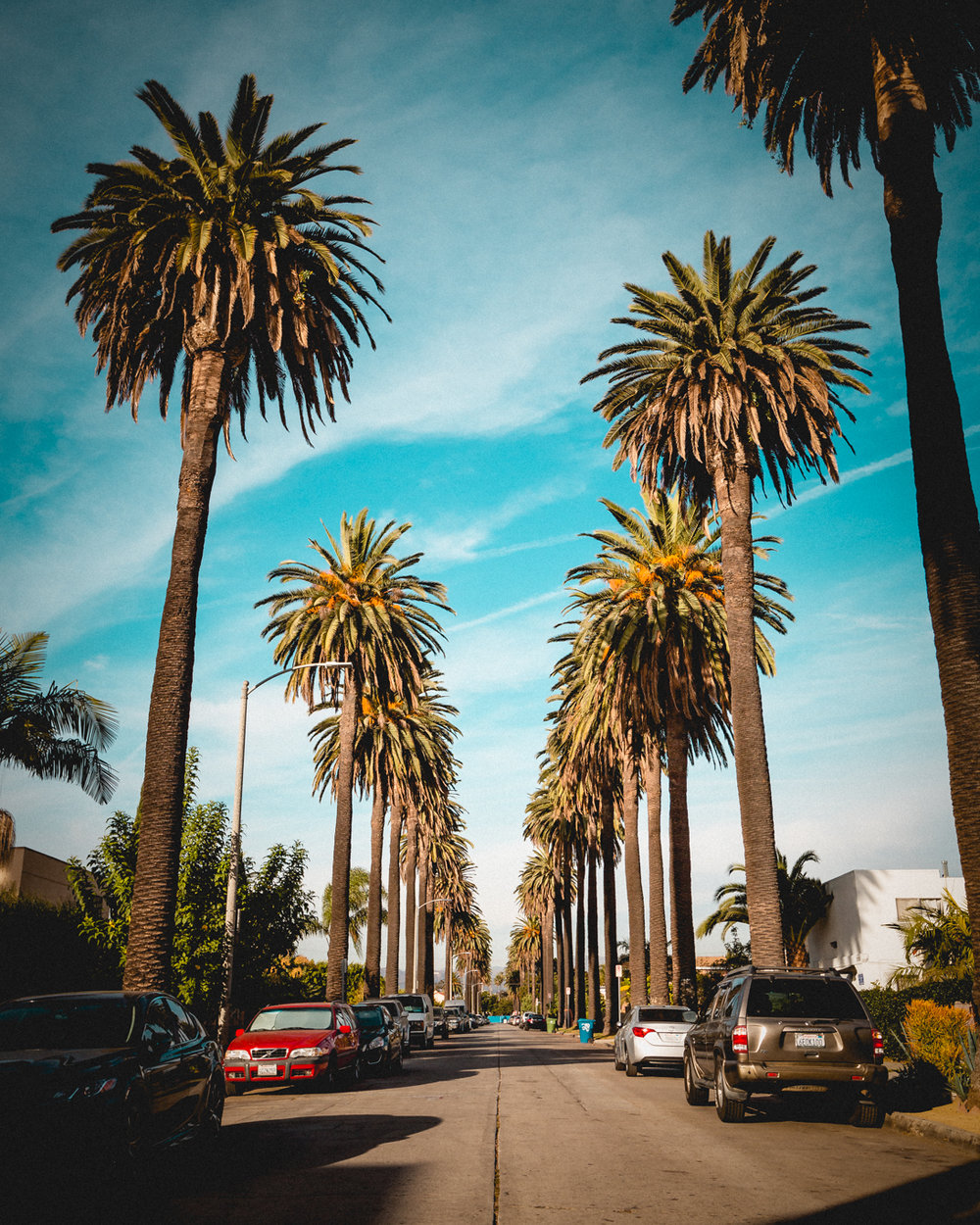 los-angeles-palm-trees-la