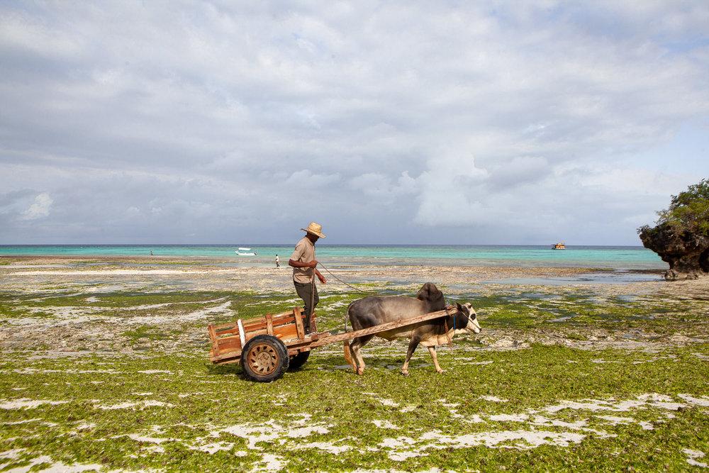 NomadicFare_Zanzibar_ConstanceAiyana37.jpg