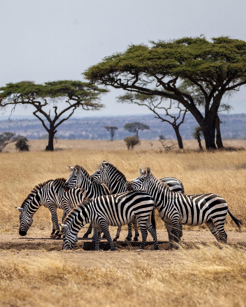NomadicFare_tanzania_GAdventures39.jpg