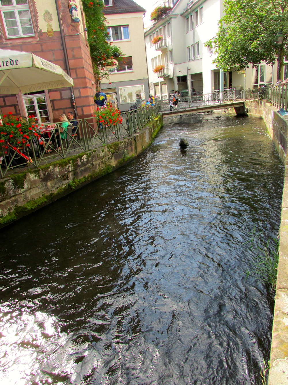 "A canal in Freiburg invites visitors to observe an ""alligator"" popping his head up (top center) as they stroll leisurely alongside."