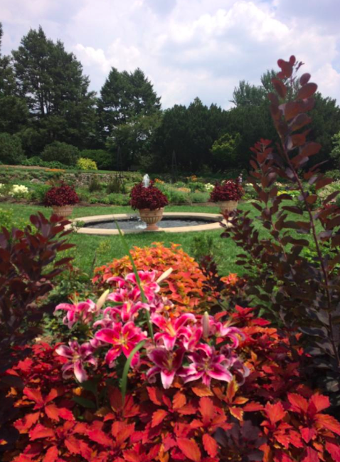 Natural beauty at the Morris Arboretum