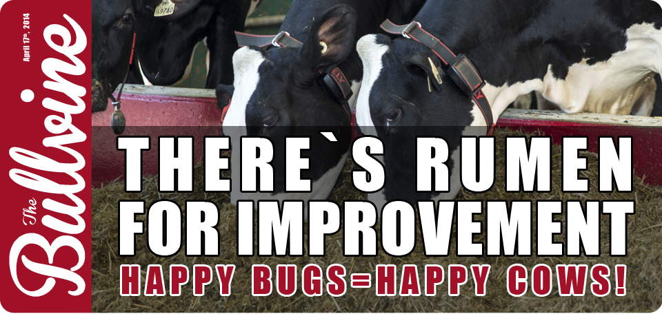 Photo 3: Banner advertisement addressing importance of rumen bug management   Source: The Bullvine, 2014.
