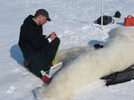 Figure 1: A biologist labeling blood samples taken from a tranquilized polar bear. Source:  U.S. Fish and Wildlife Service.