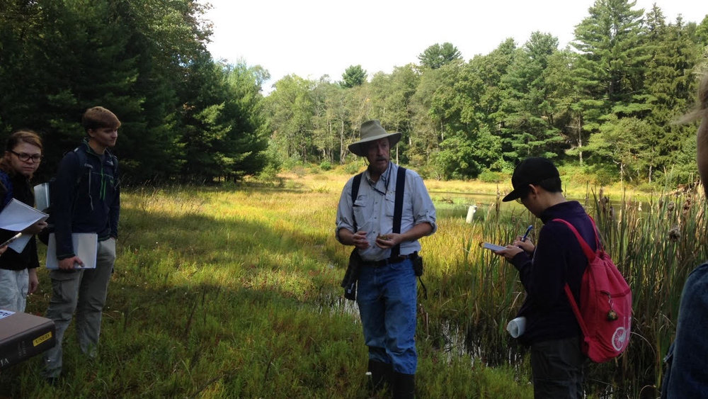 Cranberry bog in Lehigh Gorge State Park.