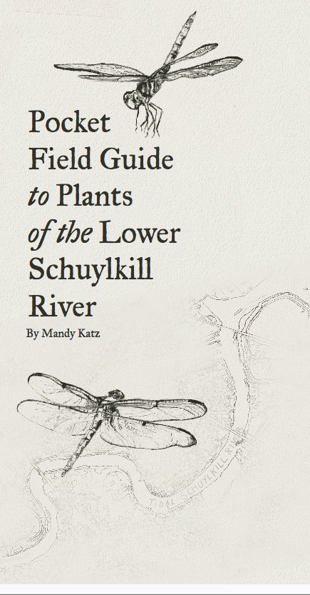 Mandy Katz, Pocket Guide to Plants of the Lower Schuylkill, Ecotopian Toolkit 2017