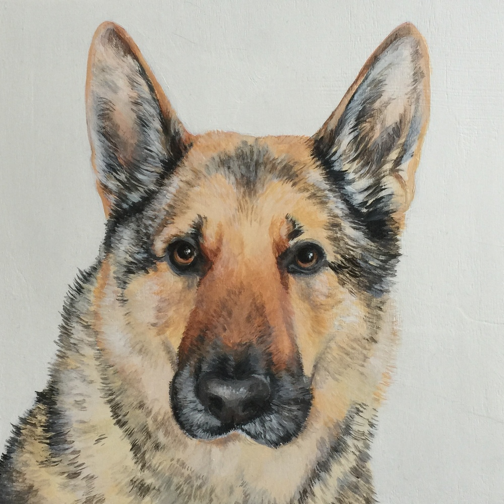 Century, the German Shepherd.