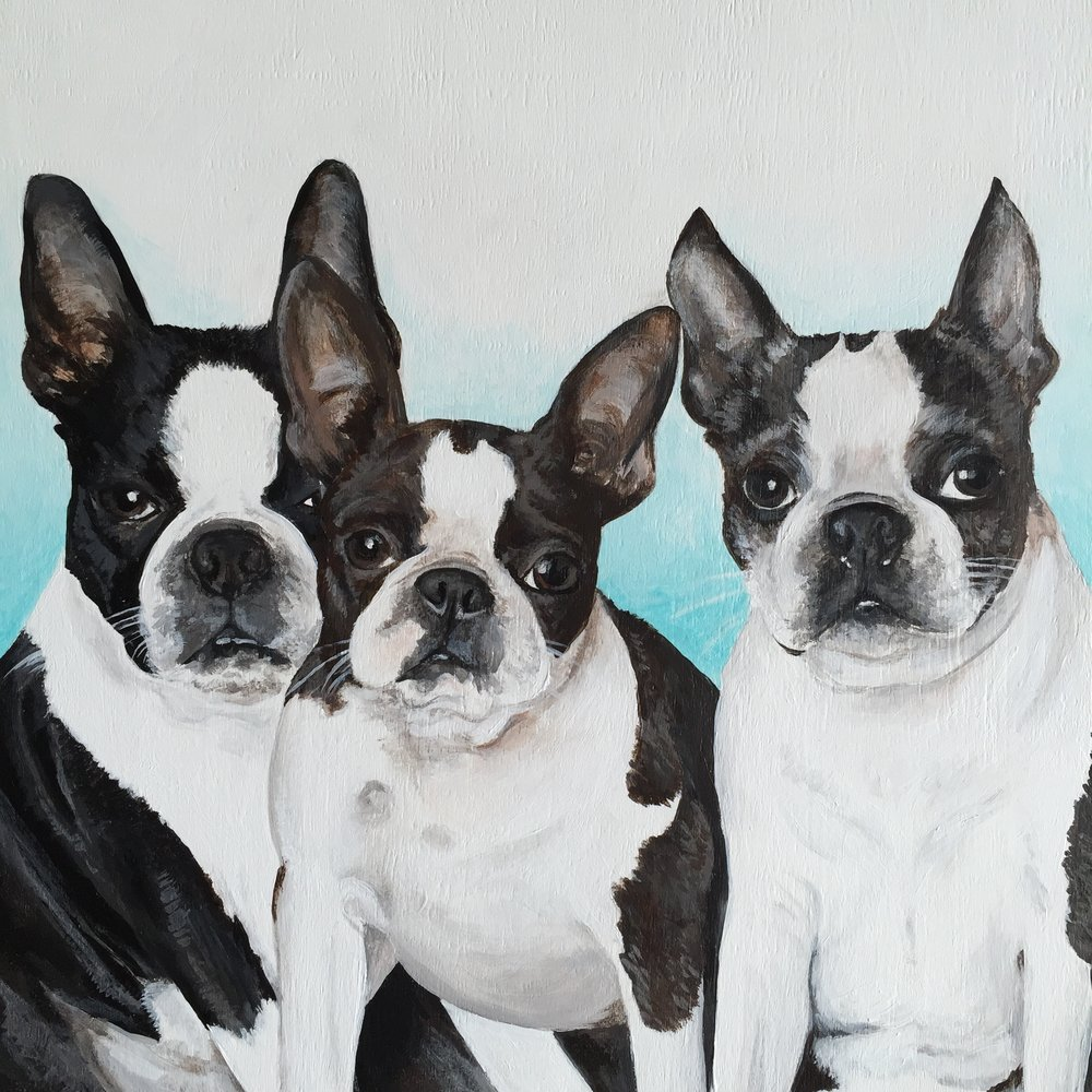 Memo, Frances, and Skylar - Boston Terriers painted for Chandra @ohmydoggies