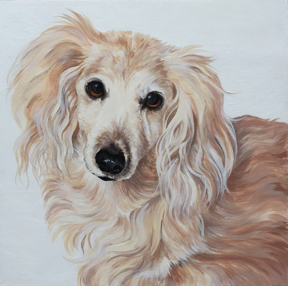 Belle, commissioned by Julie Daxon.