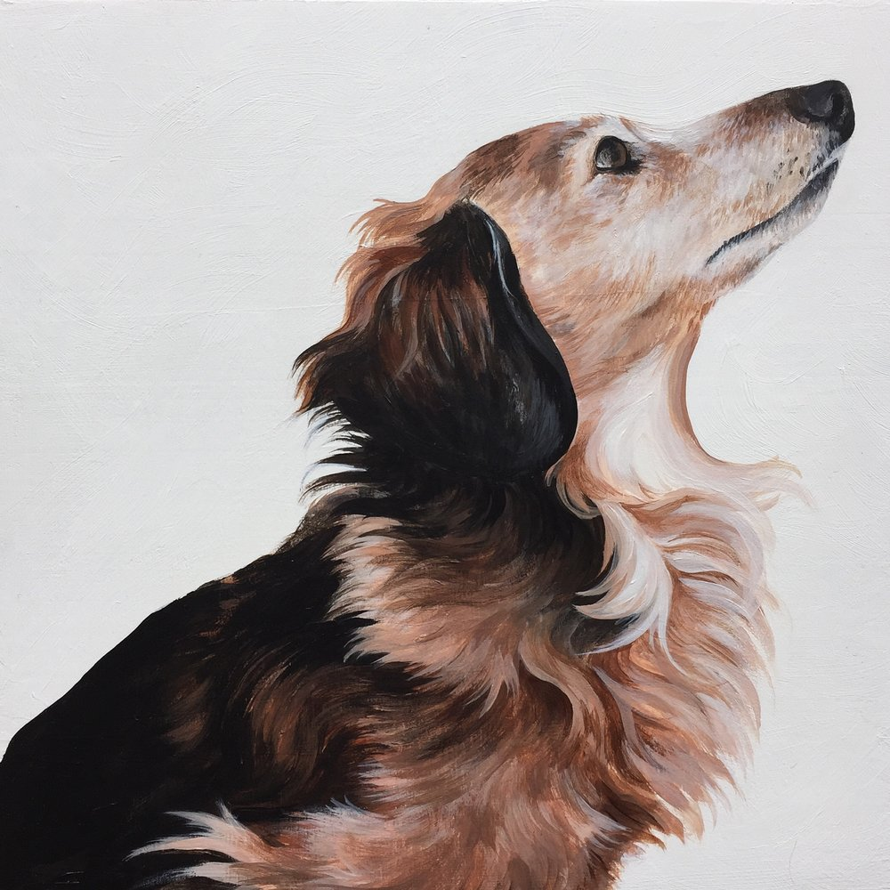 Rocky, commissioned by Julie Daxon.