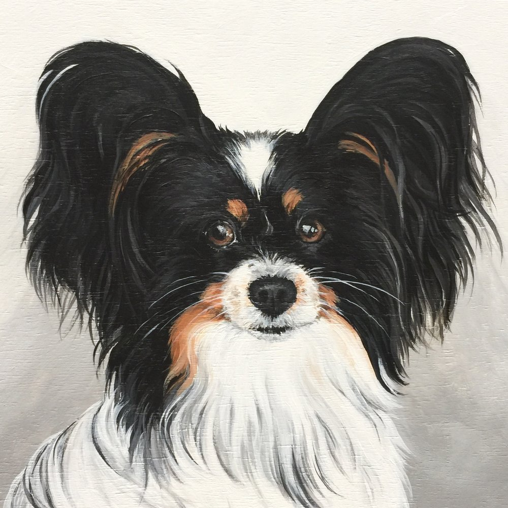 Bogey the Papillon - commissioned by Sharon