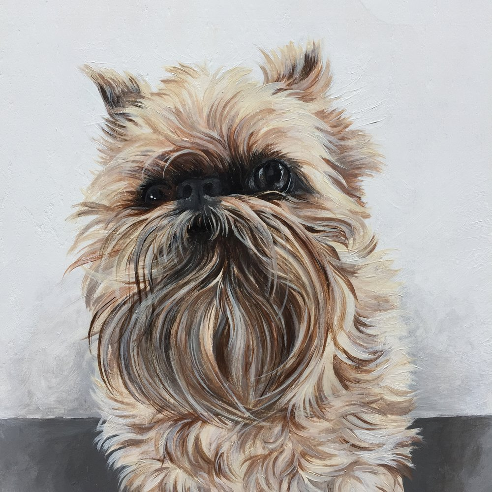 Chewie the Brussels Griffon - commissioned by Cassara
