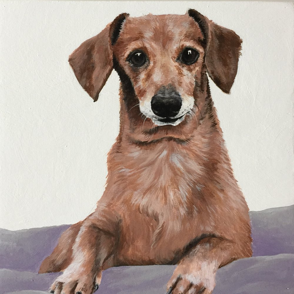 Bartels the Dachshund - commissioned by Shelby