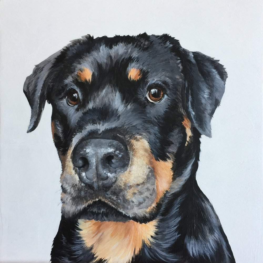 Brody the Rottie - commissioned by Susie