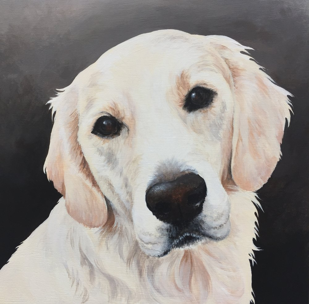 Riley the Golden - commissioned by Mike