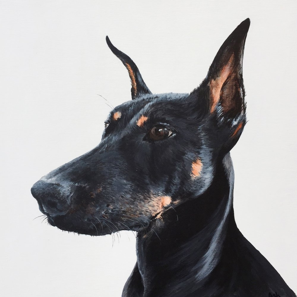 Piper the Doberman - commissioned by Katrina