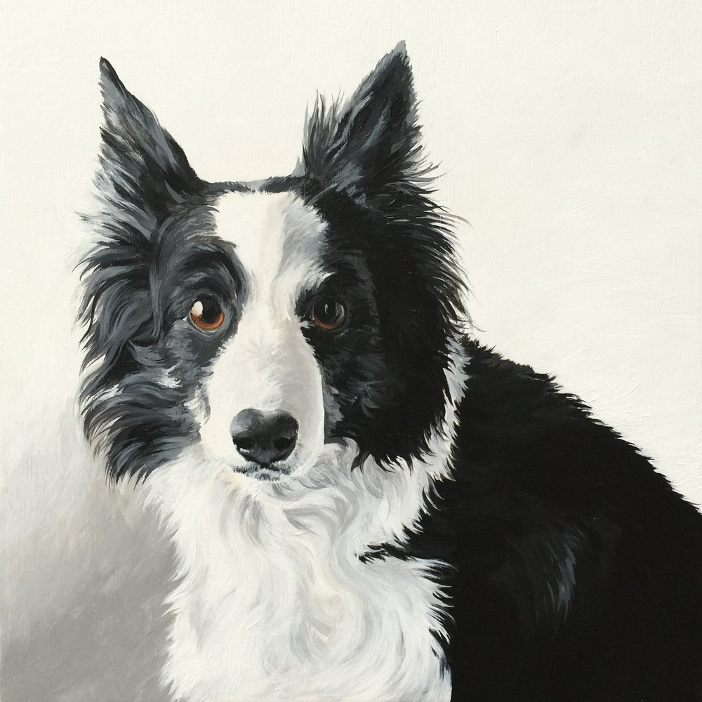 Chilli the Border Collie - commissioned by Rebbecca