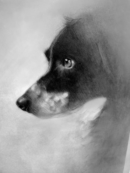 DogStudy.jpg
