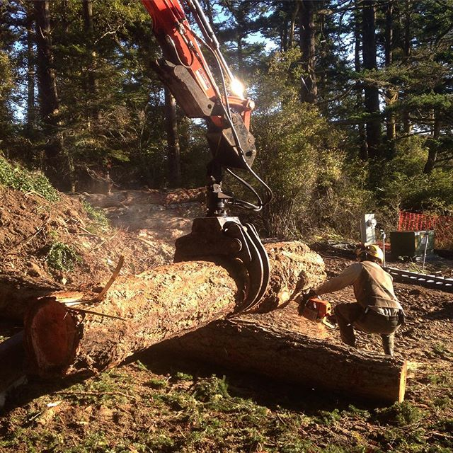 Scoping out some recently downed trees for custom furniture on an upcoming project . . . . . . . . #fir  #wood  #woodworking  #customfurniture  #islandstyle  #pnw