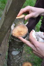 paddenstoel_enten.jpg