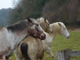 www_paardenhoofden3P1010947* kopie.jpg