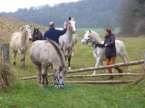 www_paarden5_L&LP1010944* kopie.jpg