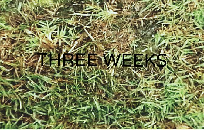 exiGrow week 4.png