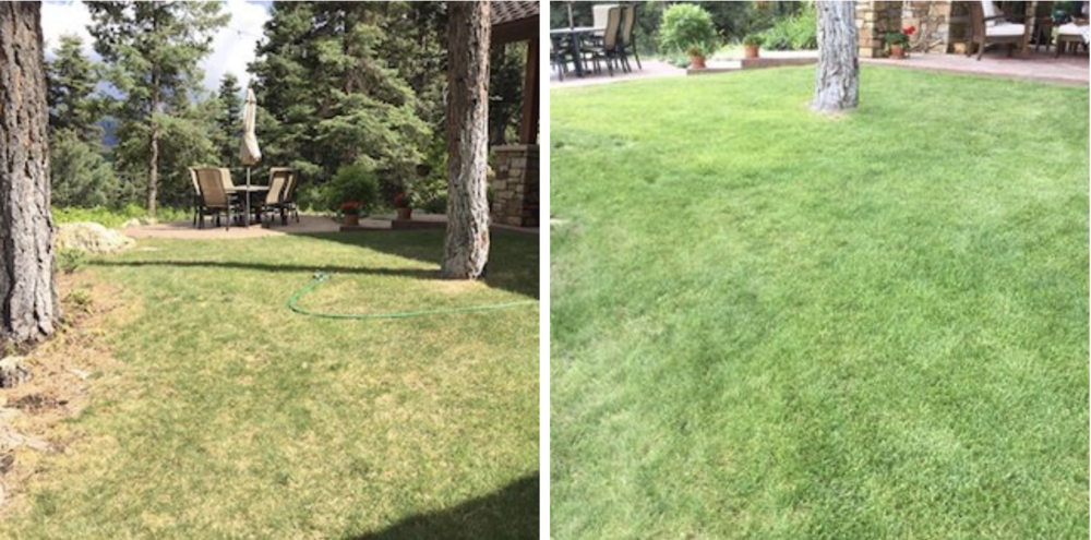 """""""I started using truSpring in May on an area of my yard that has been an issue for 10 years. I live at 8,500 feet in Colorado and the dirt is shallow and compacted. The first picture is before using truSpring. I have done three applications. Great results!"""" —  Tim, CO"""